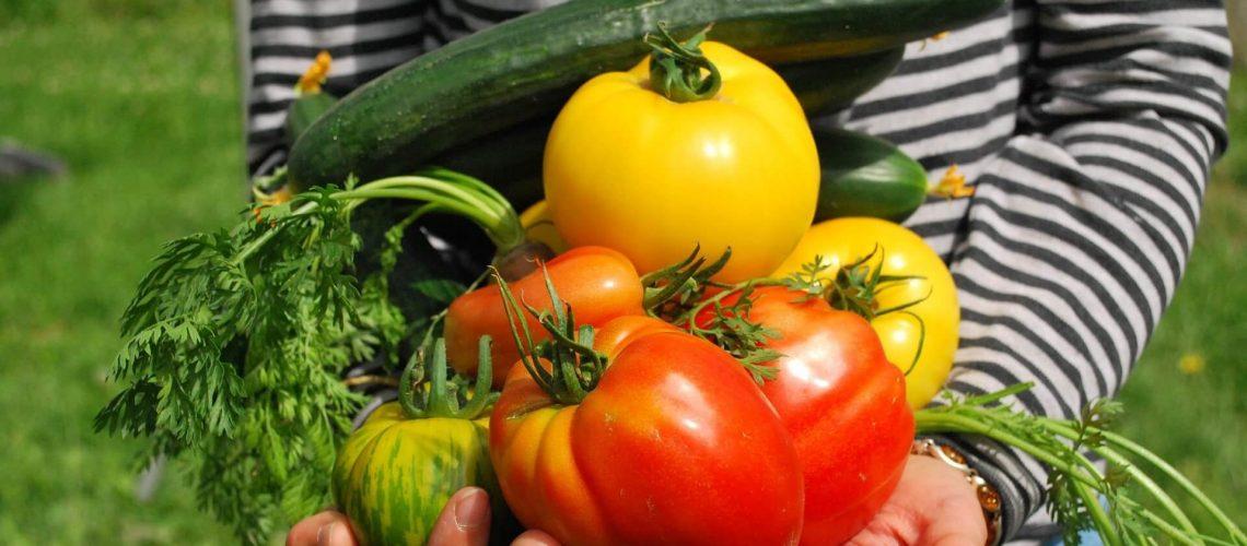 vegetables-742095_1920 (1) (1)
